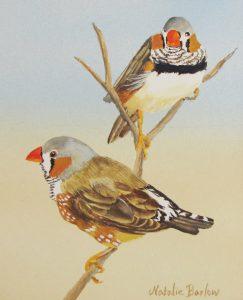 Zebra Finches, Watercolour, 20x32cm, $240