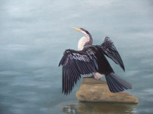 Darter, Oil 87x105cm, SOLD