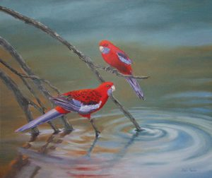 Crimson Rosellas, Oil 75x65cm, NFS