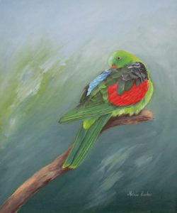 Red Winged Parrot, Oil 49x60cm, $550