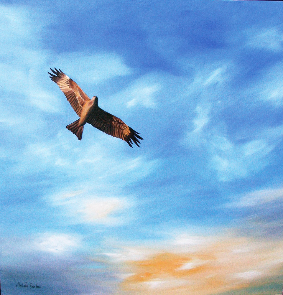 Eagle, Oil 75x75cm, SOLD