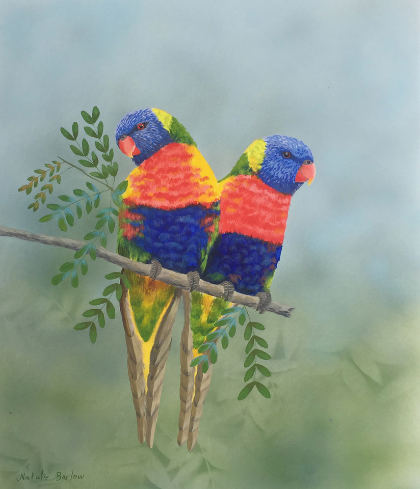 What a Pair of Lorikeets, Watercolour, 56x64cm, $590