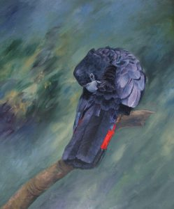 Red Tailed Black Cockatoo, Oil 78x90cm, $790