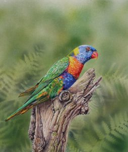 Rainbow Lorikeet, Watercolour 40x46cm, NFS