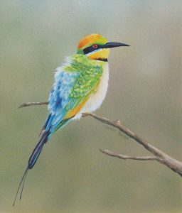 Rainbow Bee-eater, Watercolour 41x43cm, SOLD