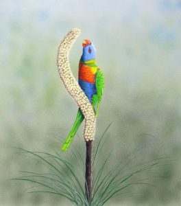 Rainbow Lorikeet on poker bush, Watercolour 66x63cm, $650