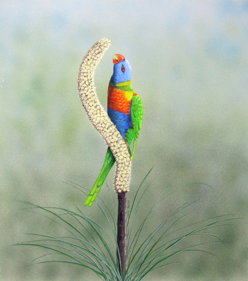 Rainbow Lorikeet on poker bush, Watercolour 66x63cm, $650