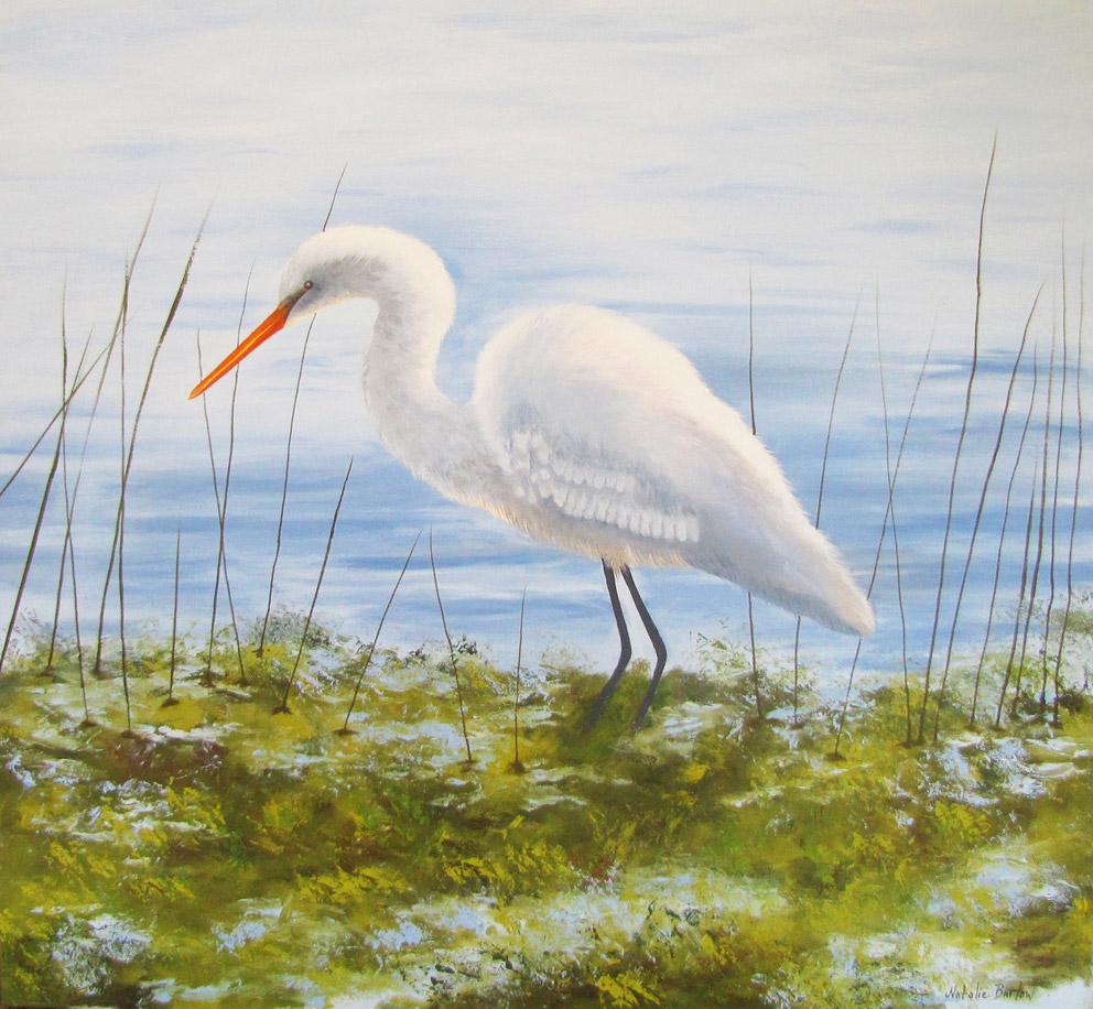 Intermediate Egret, Oil 67x67cm, $640