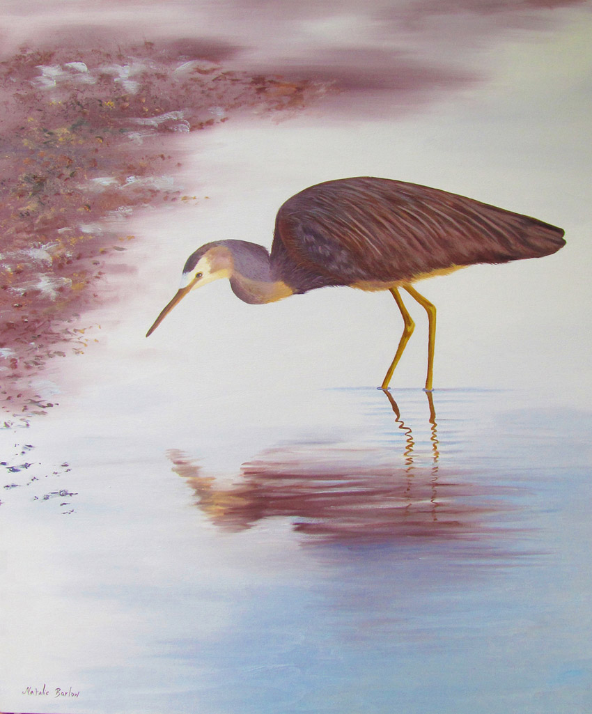 White Faced Heron, Oil 62x81cm, $590