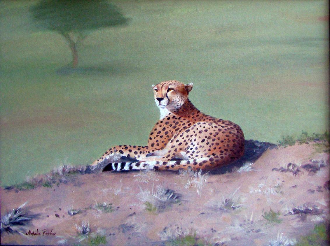 Cheetah, Oil 70cmx60cm, NFS