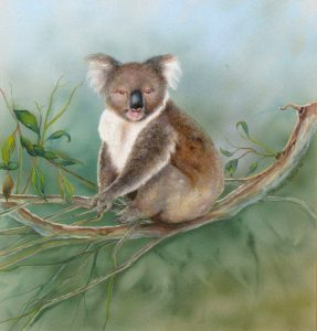 Australian Koala water colour painting