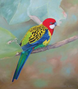 Eastern Rosella oil painting