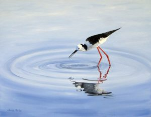 oil painting of a black winged stilt
